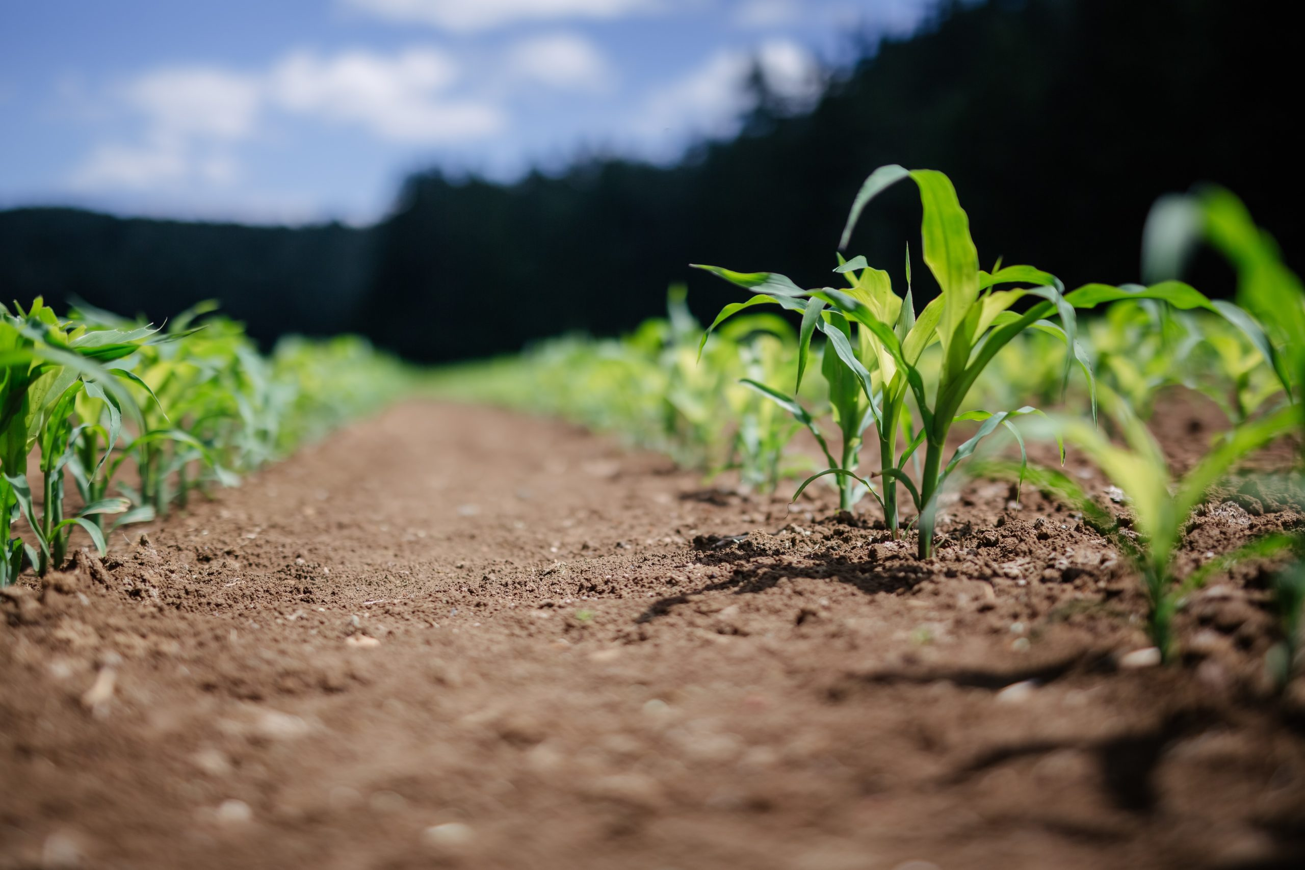 Via all'Agritech Innovation Hub: asse Tim-Confagricoltura per il rilancio del comparto - CorCom